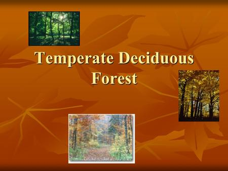 Temperate Deciduous Forest. Temperate Deciduous Forest Climate Description Seasonal variation Seasonal variation Warm summer Warm summer Cold winter Cold.