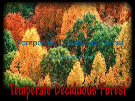 Temperate Deciduous Forest By Razan Antar. Leaves Oak tan or Brown Ash plum purple Birch Yellow Locust Green Sugar maple flame red or Orange.
