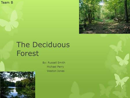 The Deciduous Forest By: Russell Smith Michael Perry Weston Jones Team B.