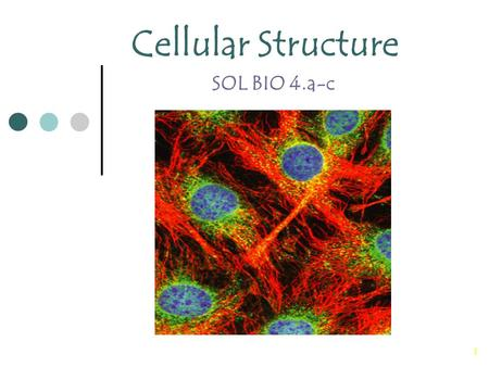 1 Cellular Structure SOL BIO 4.a-c. 2 Cell Theory The cell theory is the unifying theme in biology because it emphasizes the similarity of all living.