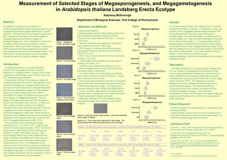 Measurement of Selected Stages of Megasporogenesis, and Megagametogenesis in Arabidopsis thaliana Landsberg Erecta Ecotype Stephany McDonough Department.
