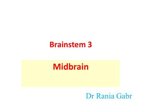 Brainstem 3 Midbrain Dr Rania Gabr. Objectives Identify the gross features of the brainstem. Briefly describe the internal structure of the brainstems.