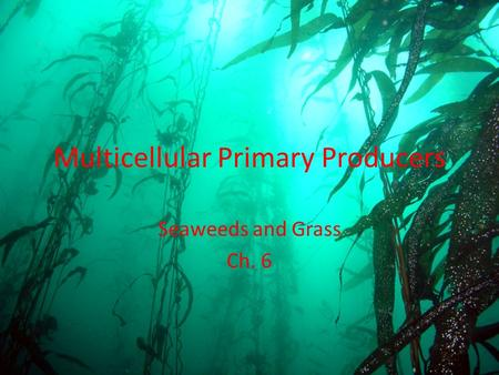 Multicellular Primary Producers Seaweeds and Grass Ch. 6.