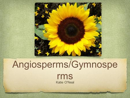 Angiosperms/Gymnospe rms Katie O'Neal. Angiosperm Angiosperms are known as flowering plants, produce seeds within a protective fruit. Ex.) apple and orange.