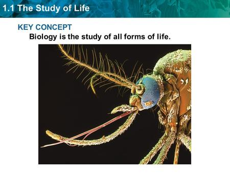 1.1 The Study of Life KEY CONCEPT Biology is the study of all forms of life.