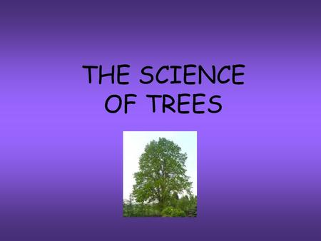 THE SCIENCE OF TREES. Sunlight gives energy to everything on earth. We need sunlight for photosynthesis Water combines with carbon dioxide to produce.