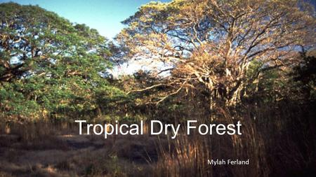 Tropical Dry Forest Mylah Ferland. Climate More seasonal than tropical rain forest Dry season last 6-7 months Abundant rainfall last 5-6 months Dry season: