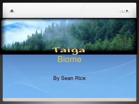 Biome By Sean Rice. Taiga's Plant Life Taiga has few deciduous trees like Birch, Alder, Willow and more; Taiga also has many evergreen trees like Fir.