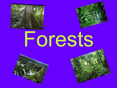 Forests Forest animals Woodland animals Into the woods The tallest species of trees in the world include the Coast Redwood, Giant Sequoia, Coast Douglas.