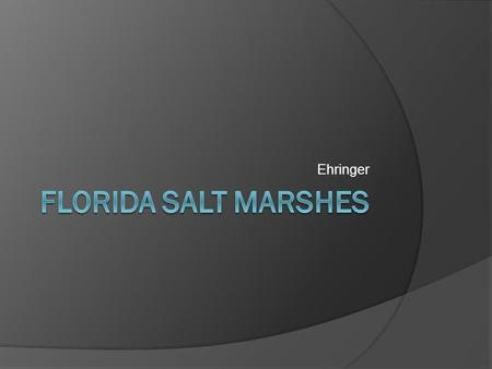 Ehringer. Salt marshes  Along the coasts of Florida, salt marshes are the bridges between the sea and the land. They are very productive systems that.