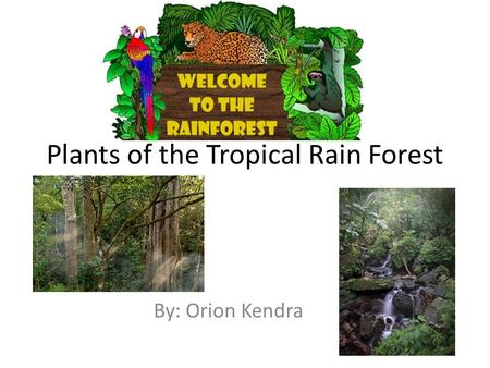 Plants of the Tropical Rain Forest By: Orion Kendra.