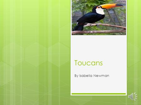 Toucans By Isabella Newman Toucans Beaks  Toucans use their beaks to pluck and peel fruit.  Toucans have largest beaks, in comparison to the size of.