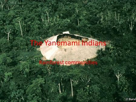 The Yanomami Indians Rainforest communities. The Yanomami Tribe Over the next few lessons we will be looking at specifically the Yanomami tribe. – How.