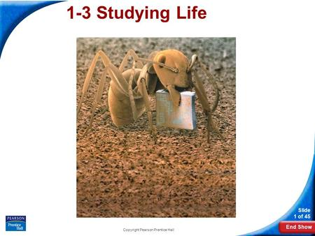 End Show Slide 1 of 45 Copyright Pearson Prentice Hall 1-3 Studying Life.