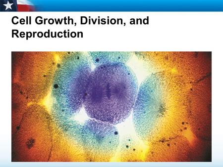 Cell Growth, Division, and Reproduction
