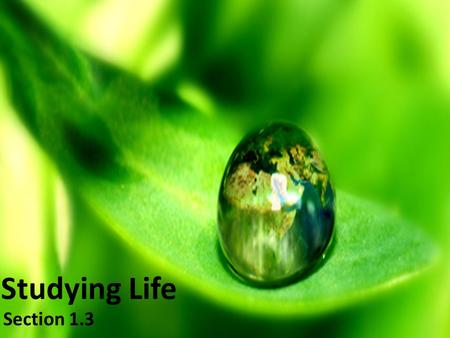 Studying Life Section 1.3. Characteristics of Living Things Biology- Study of life No single characteristic can describe a living thing. Some nonliving.