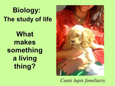 What makes something a living thing? Canis lupis familiaris. Biology: The study of life.