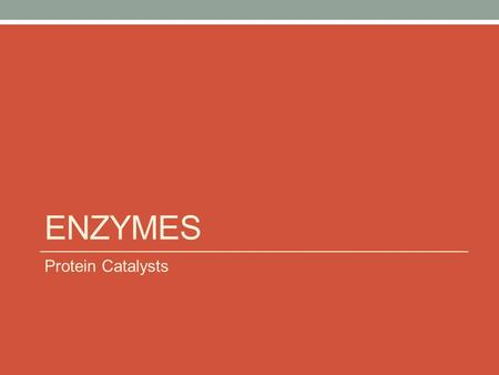 ENZYMES Protein Catalysts. Enzymes Are Catalysts Not used up in the reaction Help chemical reactions occur.