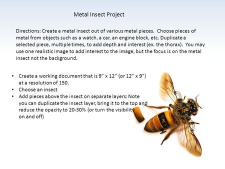 Metal Insect Project Directions: Create a metal insect out of various metal pieces. Choose pieces of metal from objects such as a watch, a car, an engine.