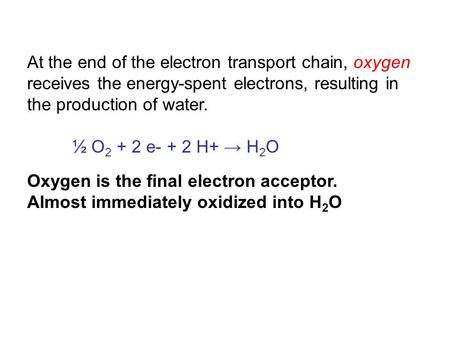 At the end of the electron transport chain, oxygen receives the energy-spent electrons, resulting in the production of water. ½ O 2 + 2 e- + 2 H+ → H 2.