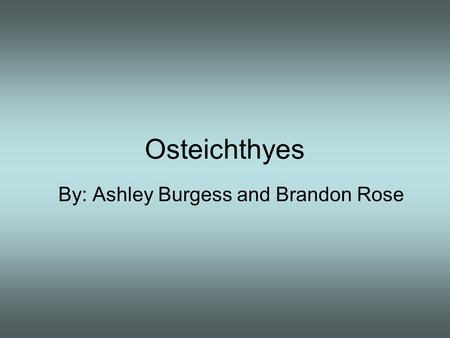 Osteichthyes By: Ashley Burgess and Brandon Rose.