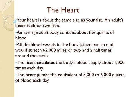 The Heart Your heart is about the same size as your fist. An adult's heart is about two fists. An average adult body contains about five quarts of blood.