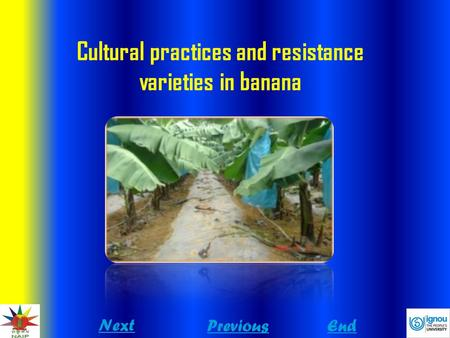 Cultural practices and resistance varieties in banana Next PreviousEnd.