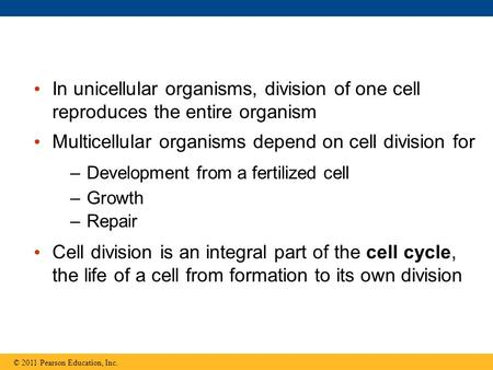 In unicellular organisms, division of one cell reproduces the entire organism Multicellular organisms depend on cell division for –Development from a fertilized.