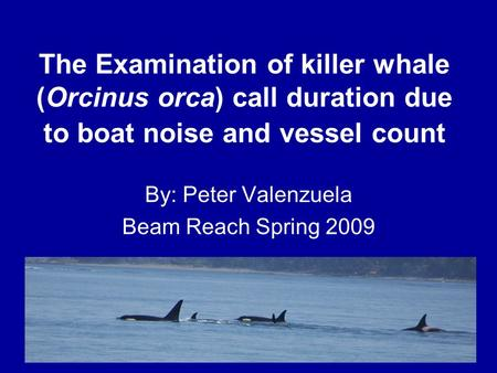 The Examination of killer whale (Orcinus orca) call duration due to boat noise and vessel count By: Peter Valenzuela Beam Reach Spring 2009.