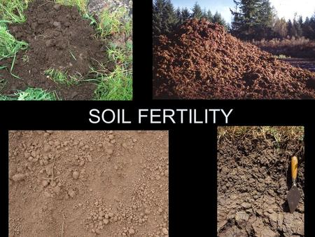SOIL FERTILITY Which soil profile is likely to be more fertile?AB.