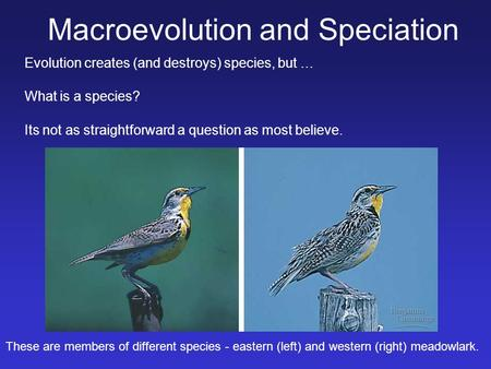 What is a species? Its not as straightforward a question as most believe. Macroevolution and Speciation Evolution creates (and destroys) species, but …