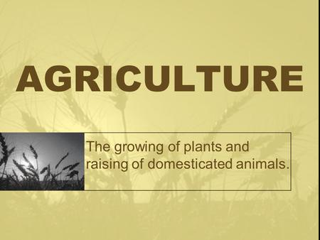 AGRICULTURE The growing of plants and raising of domesticated animals.