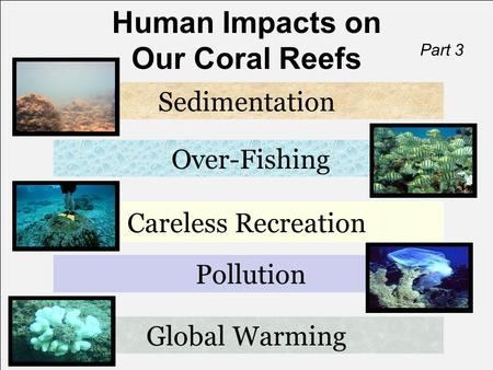 Human Impacts on Our Coral Reefs Global Warming Sedimentation Over-Fishing Careless Recreation Part 3 Pollution.