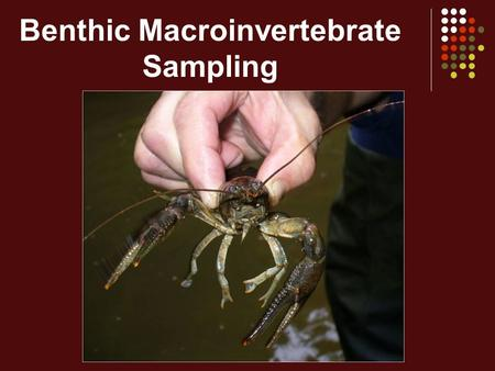 Benthic Macroinvertebrate Sampling. Sampling -WHAT All available invertebrate taxa in the entire 200 foot stream reach -WHERE All available habitats in.