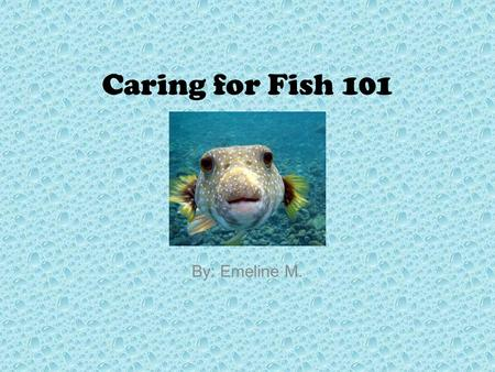 Caring for Fish 101 By: Emeline M.. Table of Contents Introduction What is a Fish? Chapter 1 - Picking Out a Fish Chapter 2 - Types of Fish Chapter 3.