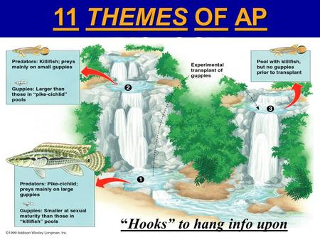 "11 THEMES OF AP BIOLOGY ""Hooks"" to hang info upon."