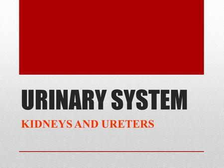 URINARY SYSTEM KIDNEYS AND URETERS. OBJECTIVES 1- Describe the normal site, size, shape and position of the kidney 2- Delineate the surface anatomy of.