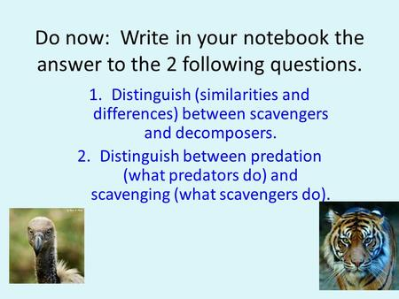 Do now: Write in your notebook the answer to the 2 following questions. Distinguish (similarities and differences) between scavengers and decomposers.