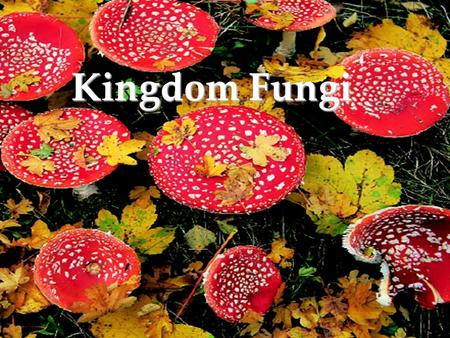 Kingdom Fungi. Fungi differ from other organisms in structure, reproduction, and in methods of obtaining nutrients. Fungi are eukaryotic, nonphotosynthetic.