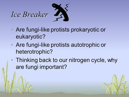 Ice Breaker Are fungi-like protists prokaryotic or eukaryotic?