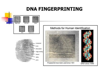 the deoxyribonucleic acid as a very useful in the world of forensic science Journal of forensic research discusses the latest research innovations and important developments in this field.