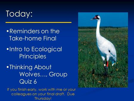 Today: Reminders on the Take-home Final Intro to Ecological Principles Thinking About Wolves…, Group Quiz 6 If you finish early, work with me or your colleagues.