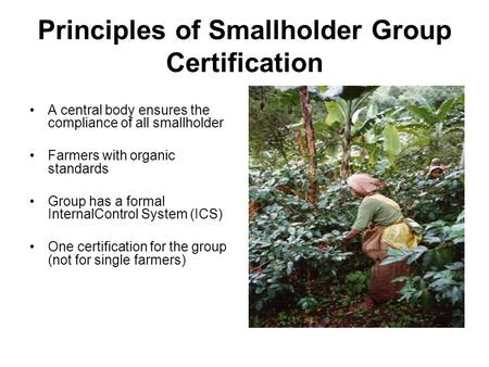 Principles of Smallholder Group Certification A central body ensures the compliance of all smallholder Farmers with organic standards Group has a formal.
