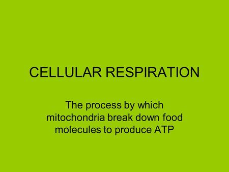 CELLULAR RESPIRATION The process by which mitochondria break down food molecules to produce ATP.
