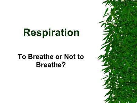 Respiration To Breathe or Not to Breathe?. Concepts You Can Never Forget….Ever! Animal Plant What is the function of this organelle? Mitochondria Why.