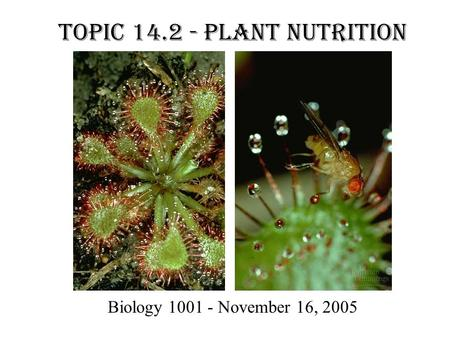 Topic 14.2 - Plant Nutrition Biology 1001 - November 16, 2005.