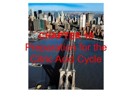 CHAPTER 18 Preparation for the Citric Acid Cycle.