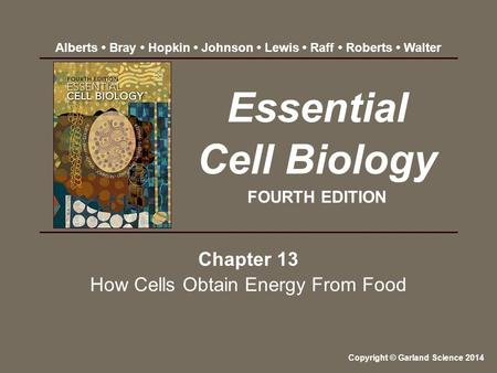 Chapter 13 How Cells Obtain Energy From Food Essential Cell Biology FOURTH EDITION Copyright © Garland Science 2014 Alberts Bray Hopkin Johnson Lewis Raff.