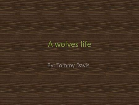 A wolves life By: Tommy Davis. The wolf family This research report is about wolves. Wolves come from a family including dingoes, red wolves, gray wolves,