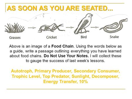 AS SOON AS YOU ARE SEATED... Above is an image of a Food Chain. Using the words below as a guide, write a passage outlining everything you have learned.